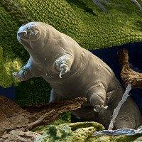 Video: Xem mặt ngang mũi dọc của sinh vật