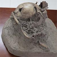 Việt Nam tách chiết thành công ADN xương động vật hơn 6.800 năm