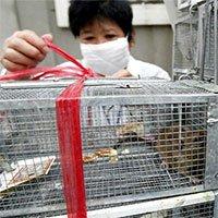 Virus hanta gây tử vong ở Trung Quốc nguy hiểm như thế nào?
