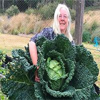 Vợ chồng người Úc trồng được cây cải bắp khổng lồ