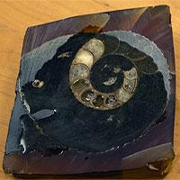 Vỏ ốc hoá thạch giúp con người tìm ra nguyên nhân khiến Trái đất ngày càng ô nhiễm?