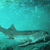 Vô tình phát hiện ra loài cá mập mới trong khi phân loại hóa thạch Tyrannosaurus rex