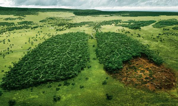 """""""Vũ khí"""" mới ngăn nạn phá rừng"""