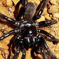 Vừa giật giải thọ nhất thế giới, con nhện 43 năm tuổi lại lăn đùng ra chết vì lý do dở hơi