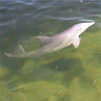 Xác cá heo dạt bờ mắc... Alzheimer như con người và lý do hết sức đáng lo ngại