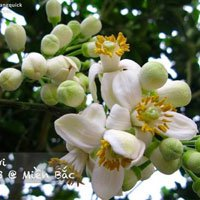 Xem bộ ảnh này bạn sẽ thấy Việt Nam mình có những mùa lúa, mùa hoa thật đẹp!