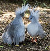 Xếp hạng các loài chim độc đáo nhất quả đất
