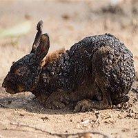 Xót xa nhìn những con thú chết cháy khi rừng Amazon bị