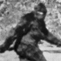 Xuất hiện video ghi lại tiếng hú lạ kỳ của Bigfoot, chứng minh sinh vật huyền bí này thật sự tồn tại